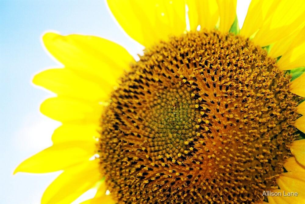 Sunflower by Allison Lane