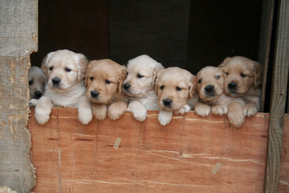 Puppies by sharney