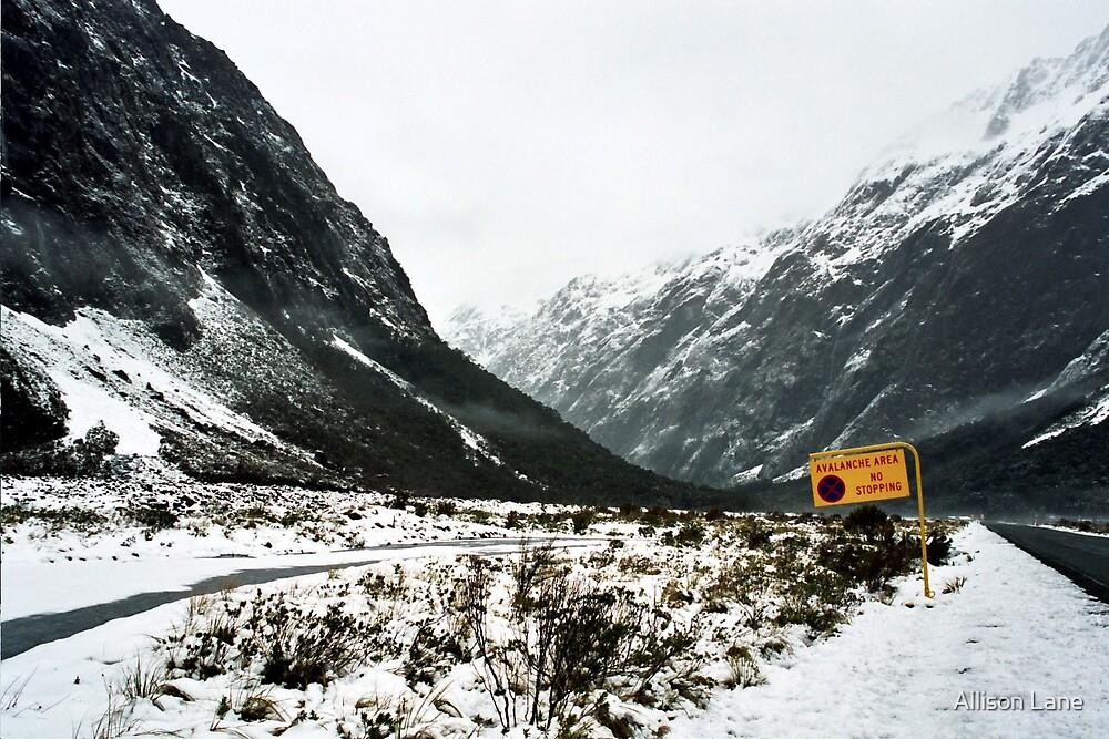 Avalanche Zone by Allison Lane