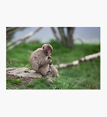 macaque Photographic Print