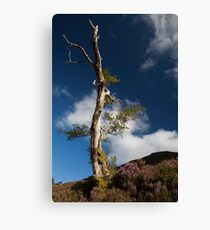 lone tree by loch muick Canvas Print