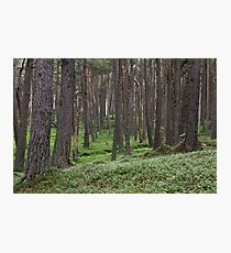 loch muick forest Photographic Print