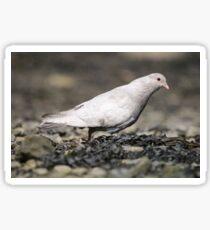 Grubby pigeon Sticker