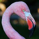 Flamingo by Paul Lenharr II
