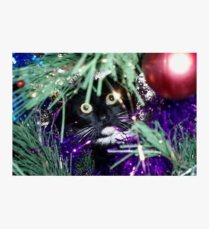 Me? I'm just decorating the tree! Photographic Print