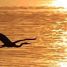 Blue heron Silhouette by Paul Lenharr II