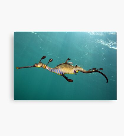 Another Day Another Dragon Canvas Print