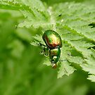 Beetle Bubble by jesika