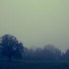 Lone Tree by Bryan Davidson