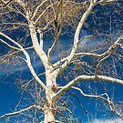 Branches and sky by Thaddeus Zajdowicz