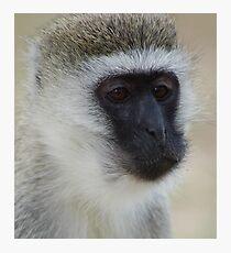 Munching Monkey Photographic Print