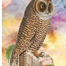Watercolour Owl by Catherine Hamilton-Veal  ©