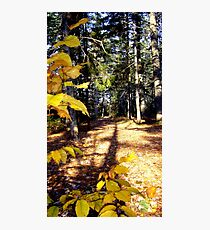Let's Walk Awhile Photographic Print