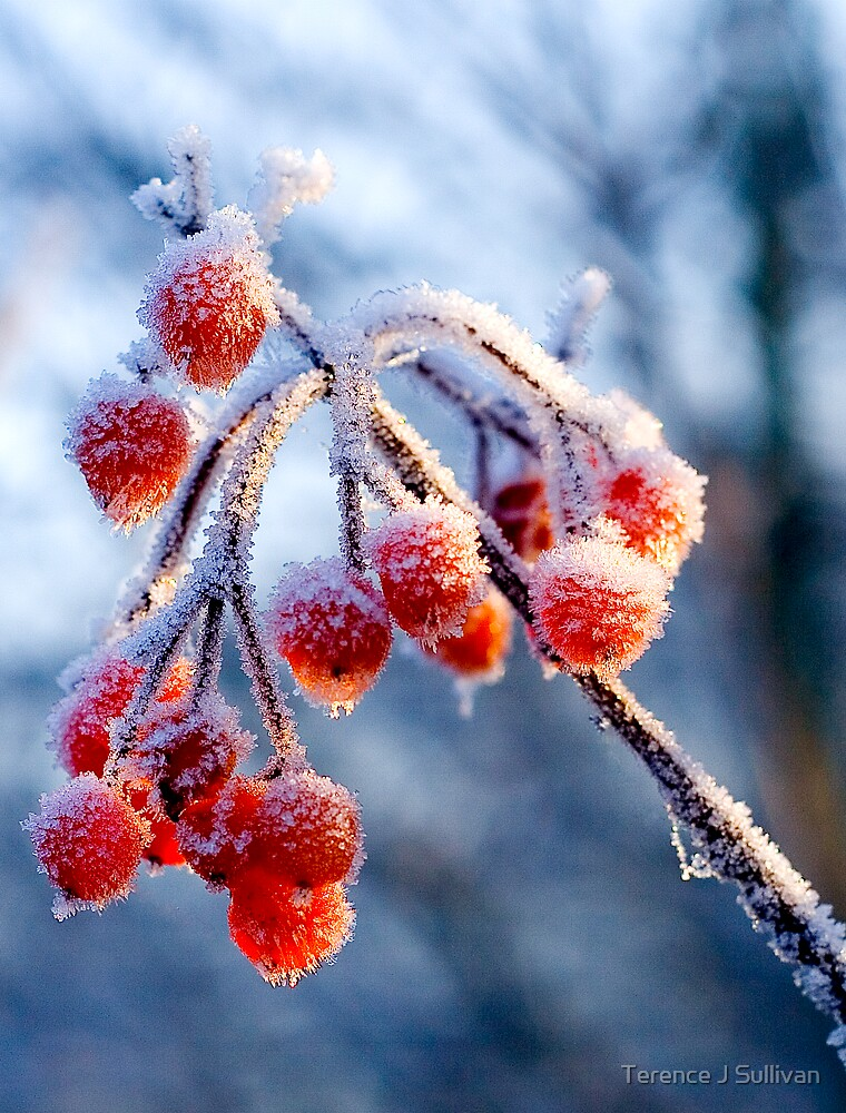 frost by Terence J Sullivan