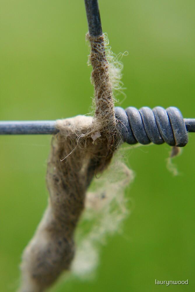 Steel Wool by laurynwood
