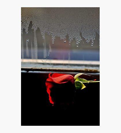 Misty rose Photographic Print