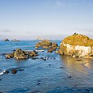Ocean Scenic at Pebble Beach (3302) by Barry L White