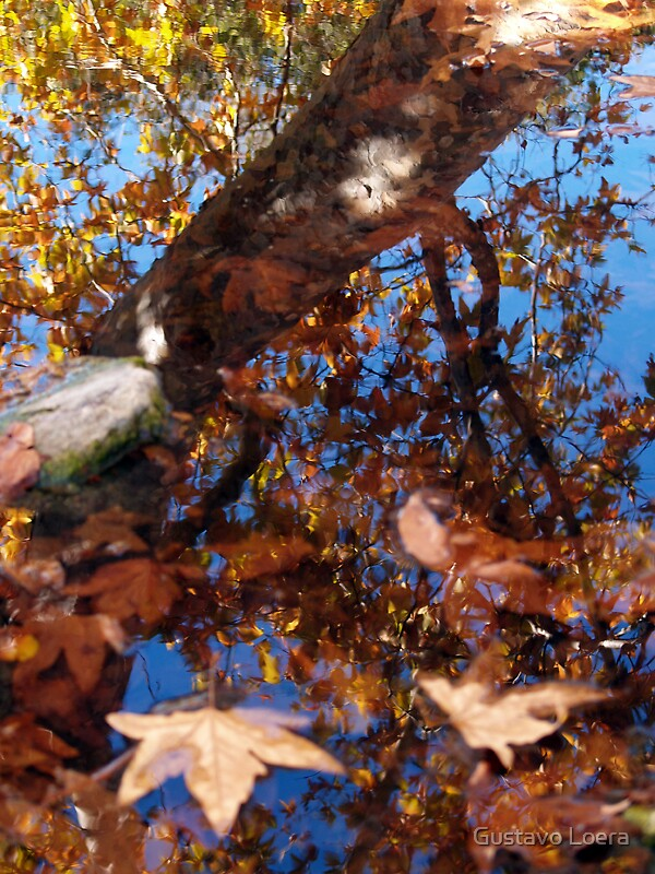 Pond in Fall by Gustavo Loera