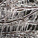 KC Ice Storm '07 by Jelderkc