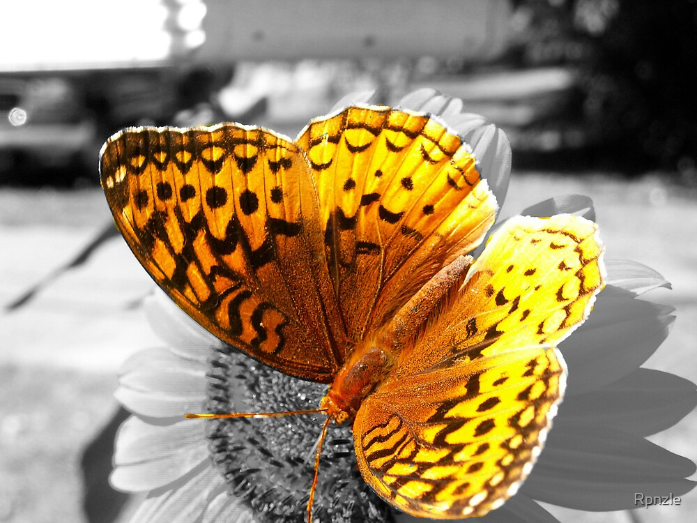 Bright Butterfly by Rpnzle