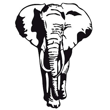 Elephant Black & White by wellcesar