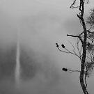 Tree at Wallaman by Sara Lamond