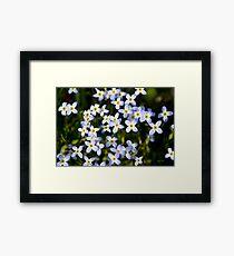 Spring Garden Bluet Flowers Framed Print