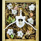 Tarot of Bones - Ace of Pentacles by TheGreenWolf