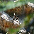 Sunbathing on the rocks! by Aaron Blackwell