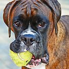 Tennis jedermann ?? ... -Boxer Dogs Series- von Evita