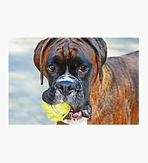 Tennis anyone??... -Boxer Dogs Series- Photographic Print
