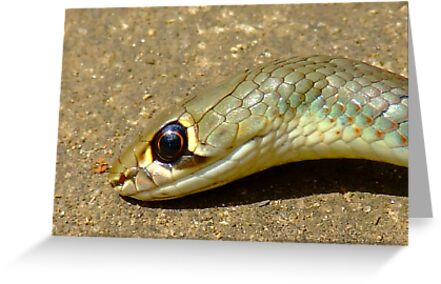 yellow Whip Snake-Macro- by Beccaboo