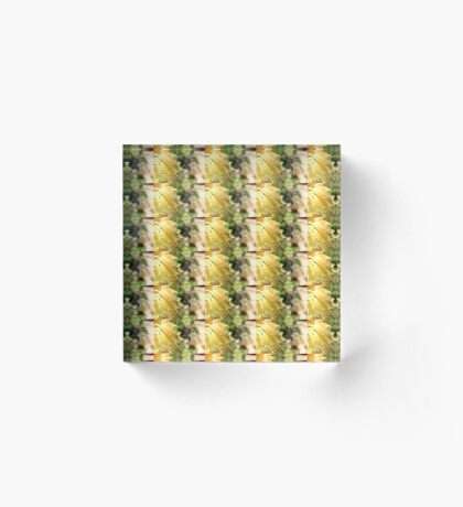 The Plight of our Honey Bees Acrylic Block