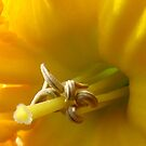 daffodil stamen by Jan Stead JEMproductions
