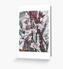 Blooming Plum Tree Greeting Card