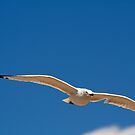 White Bird Against Blue Sky by Robin Fortin IPA