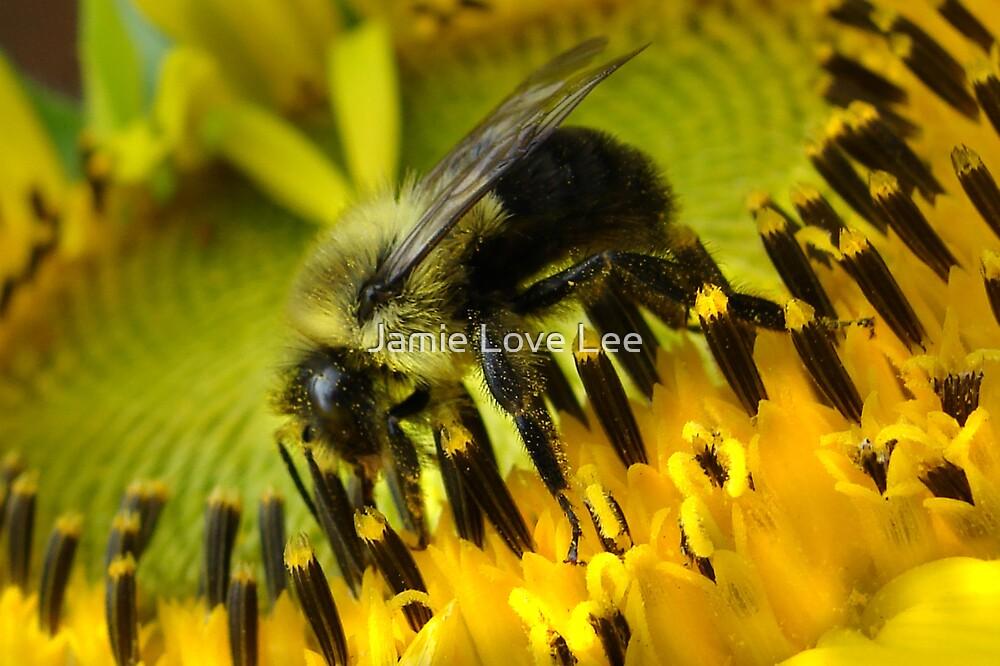 Busy Bee by Jamie Lee