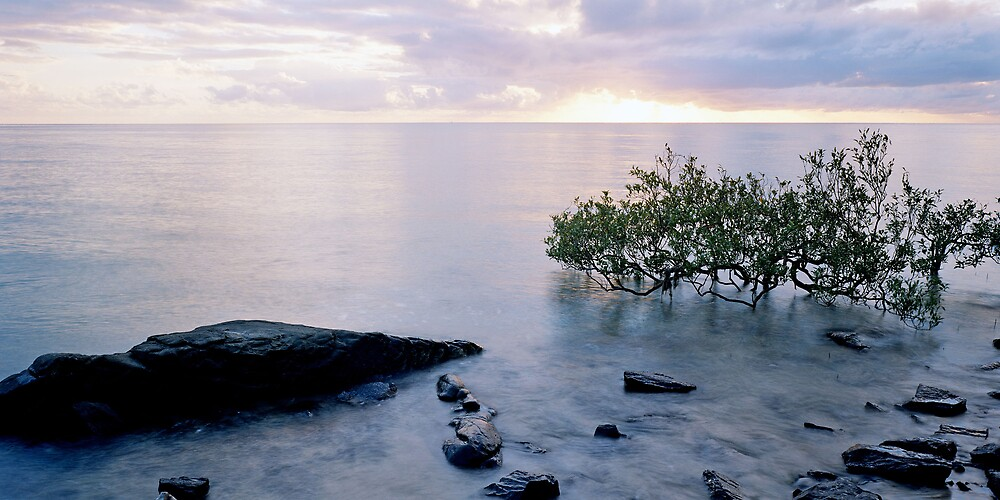Calm Rocky Mangrove Sunrise by mgimagery