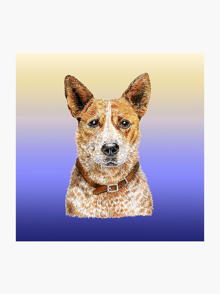 Love Me Love My Australian Cattle Dog - Red Beauty | Photographic Print