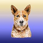 Love Me Love My Australian Cattle Dog - Red Beauty by didielicious