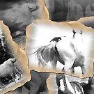 horses by conilouz