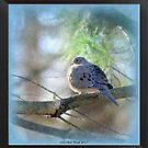 A Mourning Dove Roosting on a Cool Spring Eve by Deb  Badt-Covell