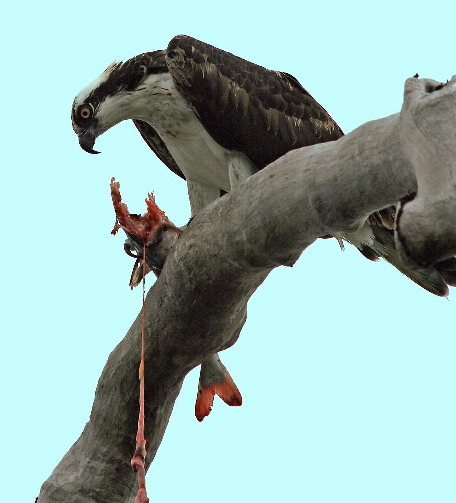 Osprey Gore by Ricky Howard