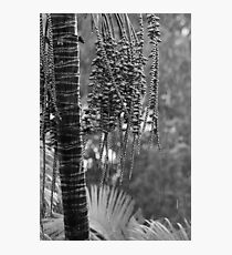 Palm in the rain Photographic Print