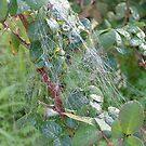 spiderweb by emem