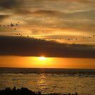 cormorant sunset by emem