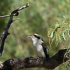 Laughing Kookaburra  by Margaret Stanton