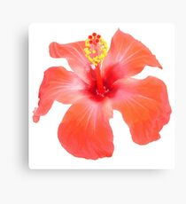 Red Hibiscus Vector Isolated Canvas Print
