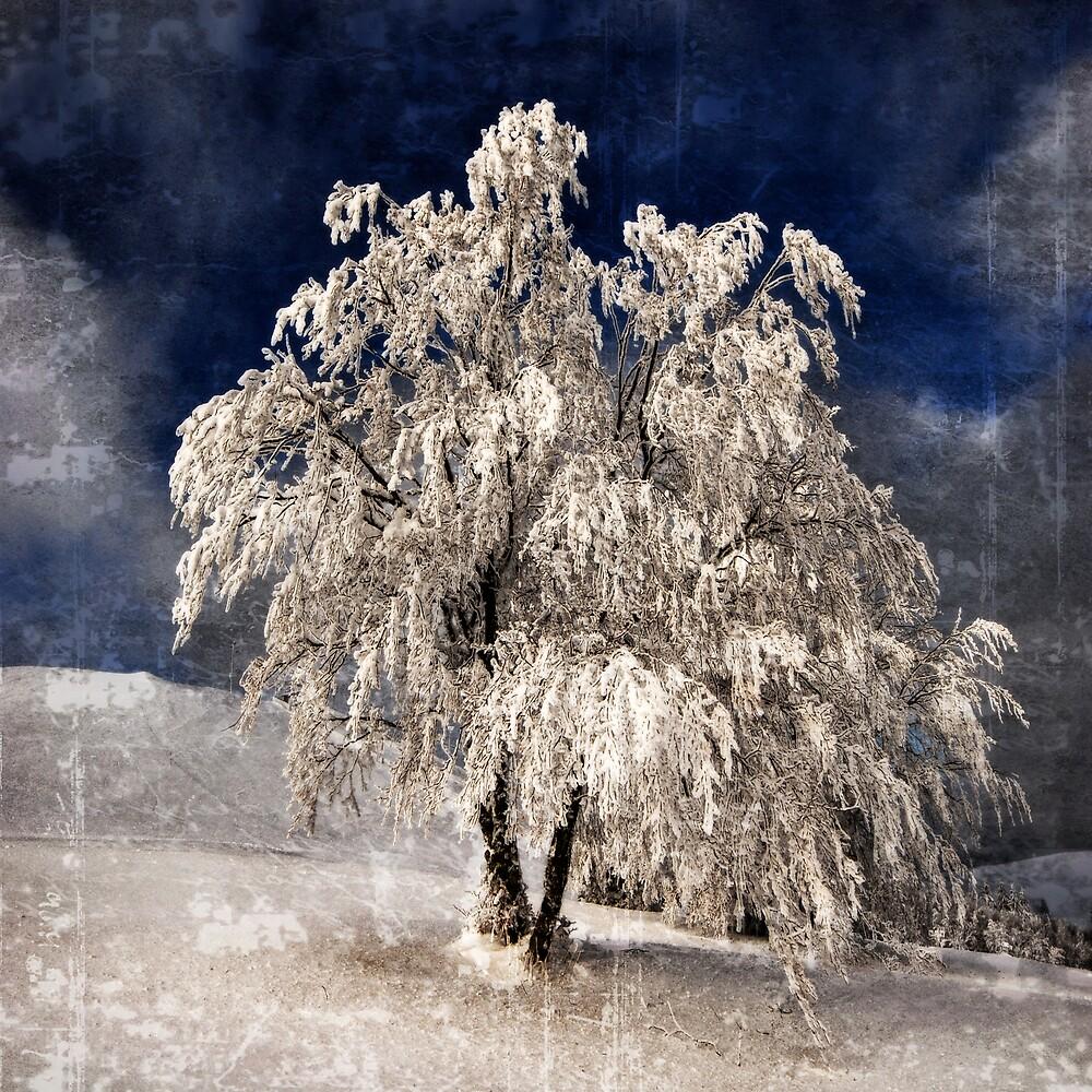 Angel Dust by Philippe Sainte-Laudy