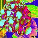 Beautiful flowers by Loredana Messina